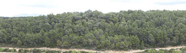 forest trees woods spain