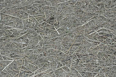 grass dead groundcover hay