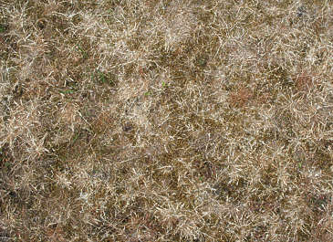 grass dead yellow
