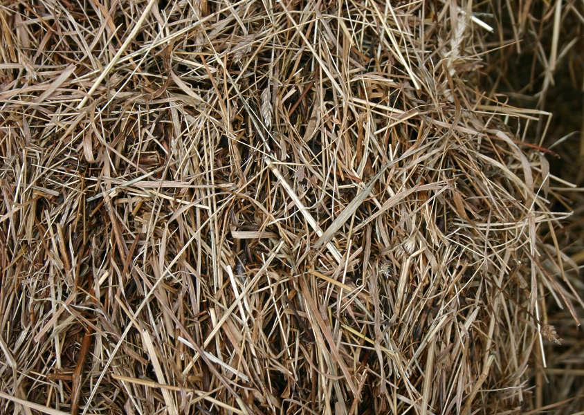 Anderson Doors And Windows >> GrassDead0024 - Free Background Texture - grass dead hay brown beige
