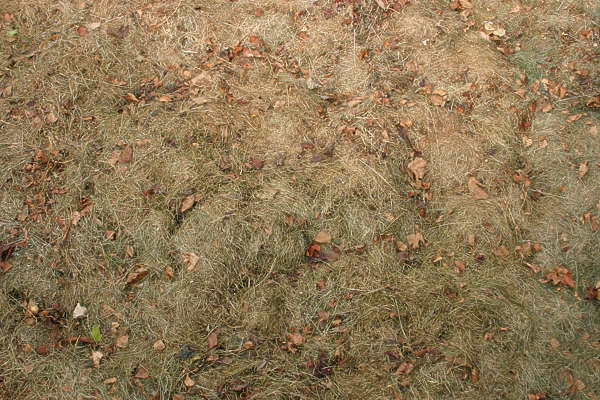 grass dead ground leaves
