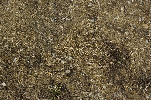 grass dead ground earth dry