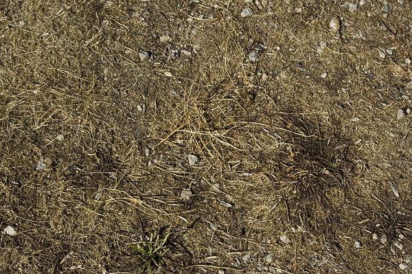 GrassDead0033 - Free Background Texture - grass dead ground