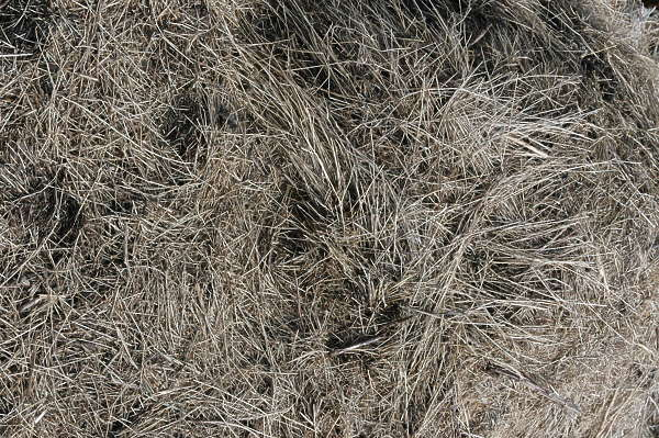 grass dead dry ground