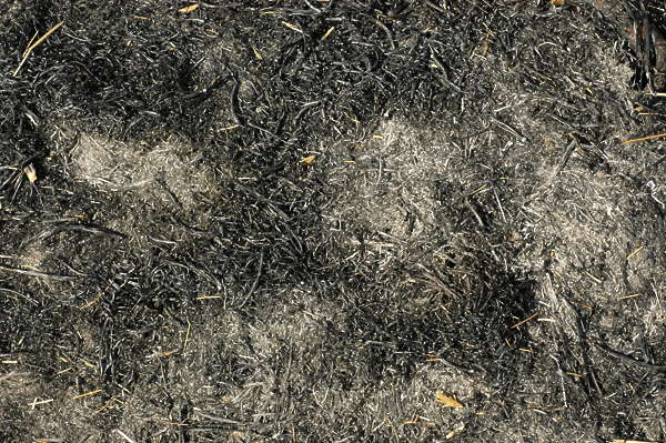 grassdead0039 - free background texture