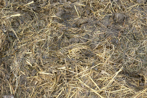 grass dead ground hay dry manure poop shit