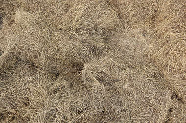 hay grass dead reed