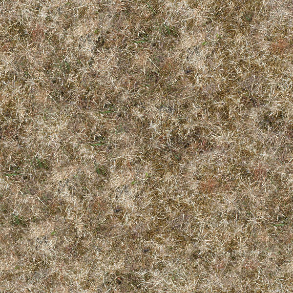 Grassdead0009 Free Background Texture Grass Dead