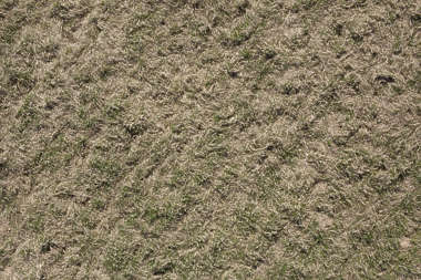 aerial grass dead dry long