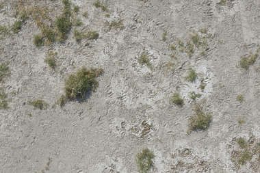 aerial ground terrain sand soil earth grass dry dead