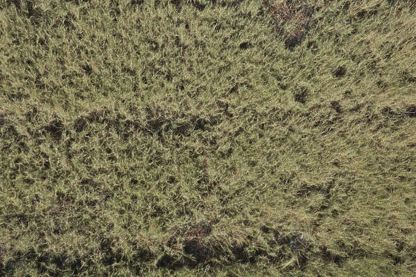 aerial ground terrain grass dry dead