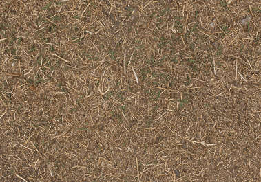 grass ground dry
