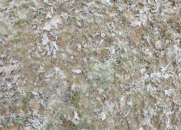 ground frozen winter cold grass