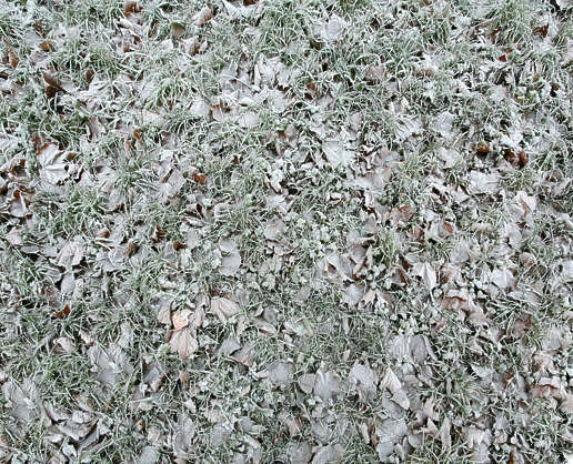 ground frozen winter cold grass leaves