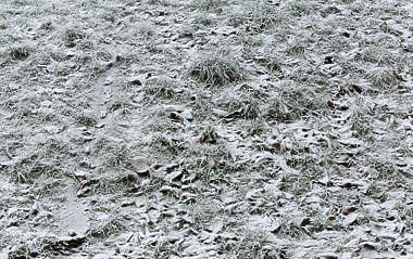ground frozen winter cold grass snow
