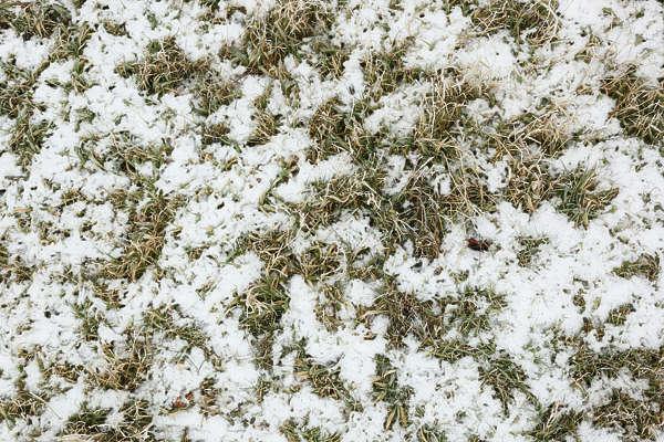 Grassfrozen0027 Free Background Texture Snow Ground Grass Green Brown White Light Seamless Seamless X Seamless Y