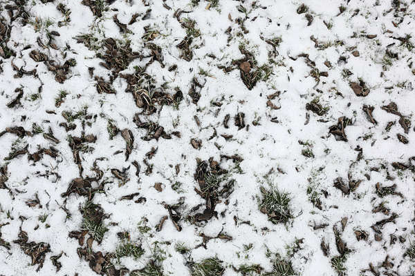 snow ground leaves