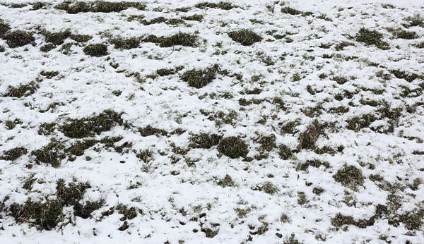 snow ground grass grunge