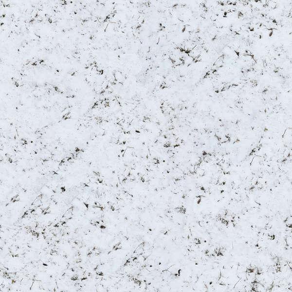 grassfrozen0039 - free background texture