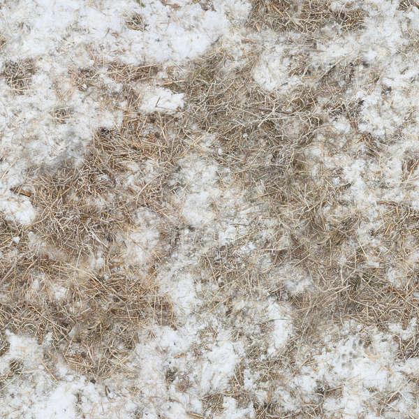 grassfrozen0038 free background texture snow ground