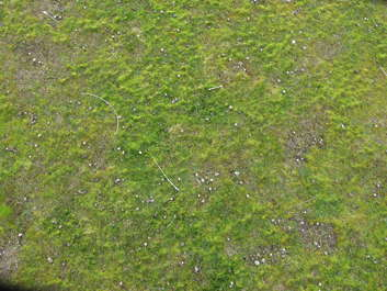 grass short mossy groundcover