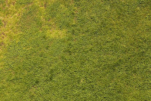 Short Grass Unity Texture – Billy Knight