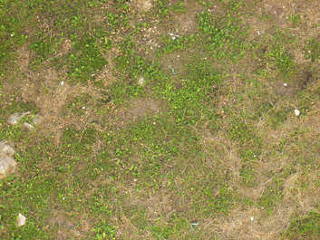 grass ground dry dead