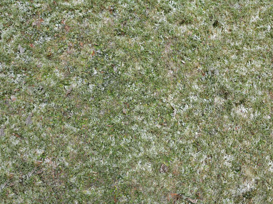 grass ground frozen cold