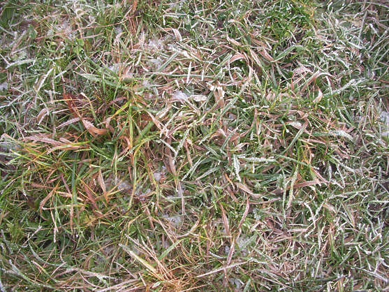 grass frozen