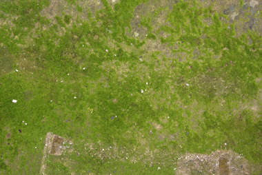 ground grass