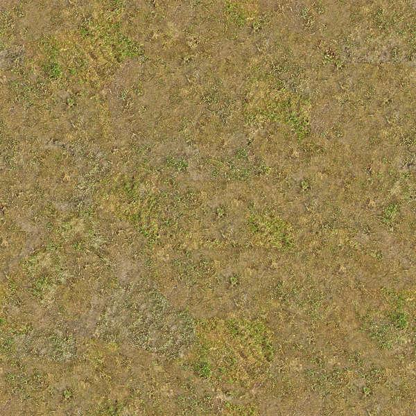 grass0106 free background texture grass short ground