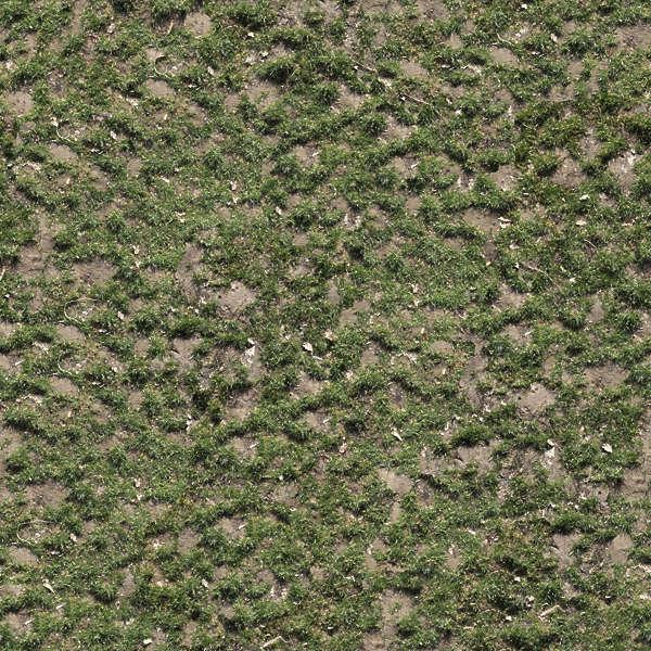Grass0119 Free Background Texture Grass Sand Short
