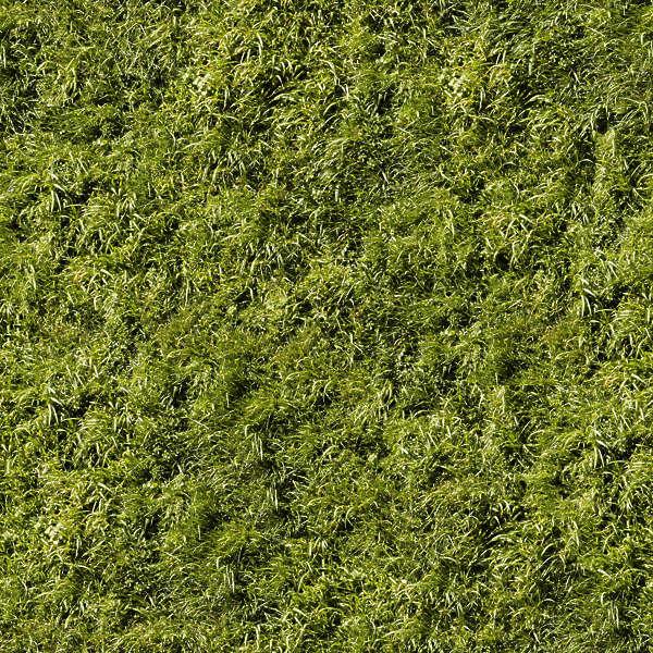 Farmland: Free Background Texture
