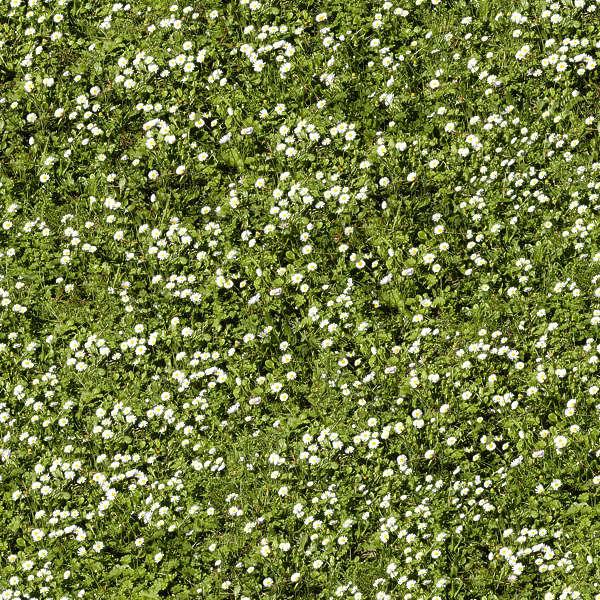 Grass0038 Free Background Texture Grass Short Flowers