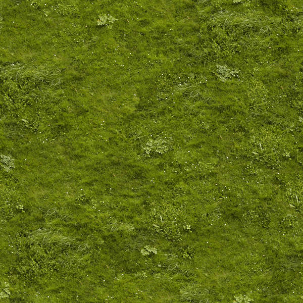 Grass0043 Free Background Texture Grass Short Green