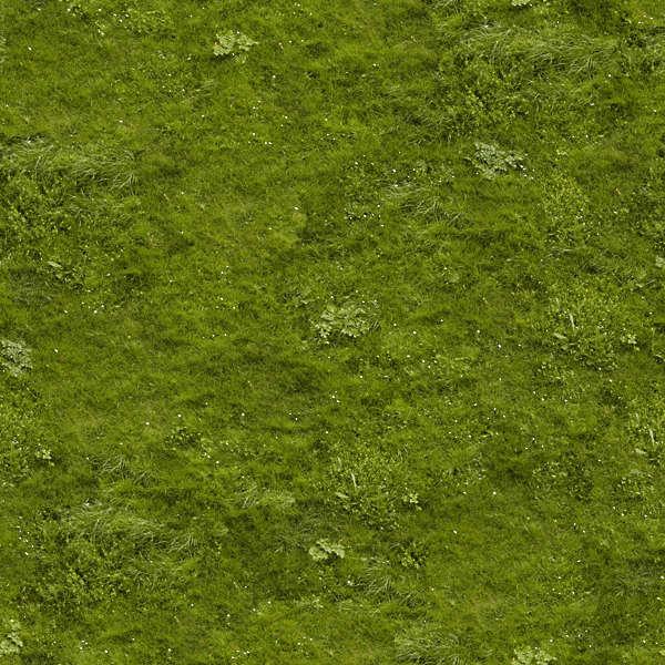 grass0043