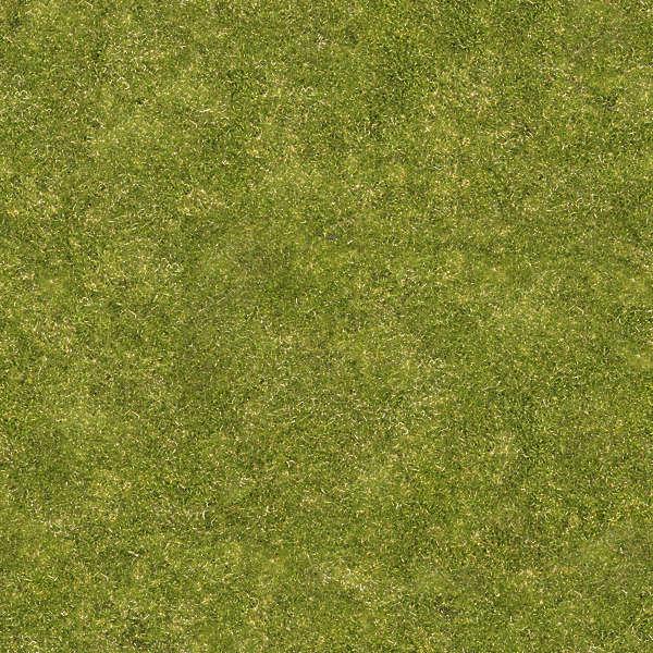 Grass0066 Free Background Texture Grass Short Green