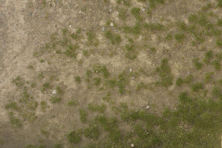 Grass0135 Free Background Texture Grass Sand Gradient