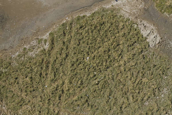 aerial water soil sand mud shore shoreline grass