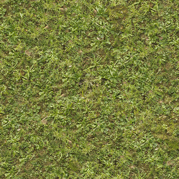 grass0146 free background texture ground grass terrain