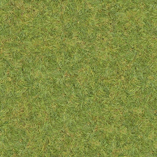 Grass0130 Free Background Texture Grass Short Green