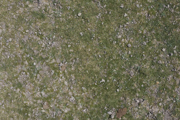 Grass0157 - Free Background Texture