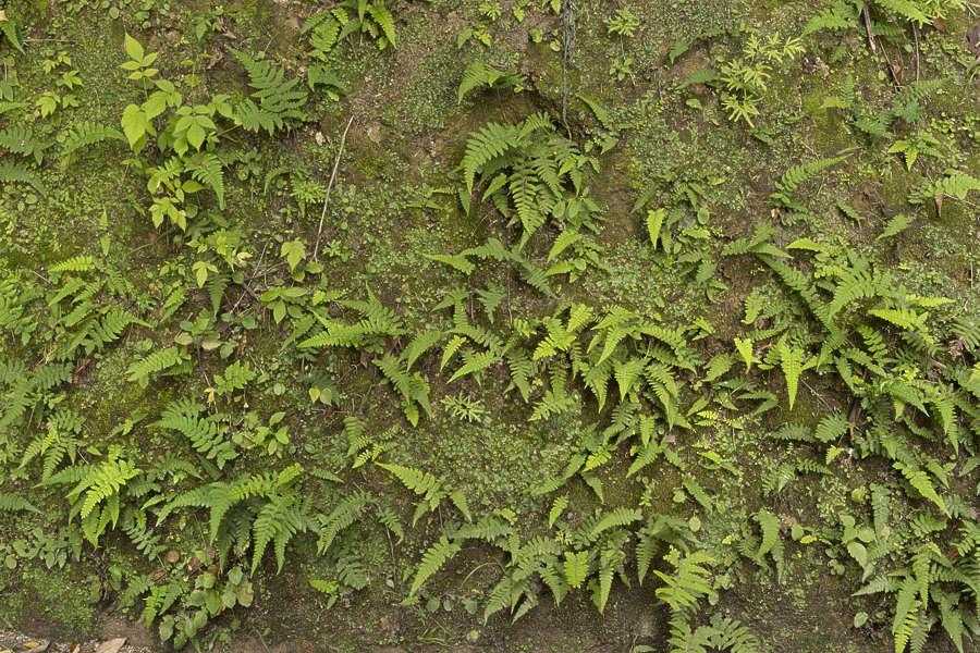 Groundplants0208 Free Background Texture Plants Plant