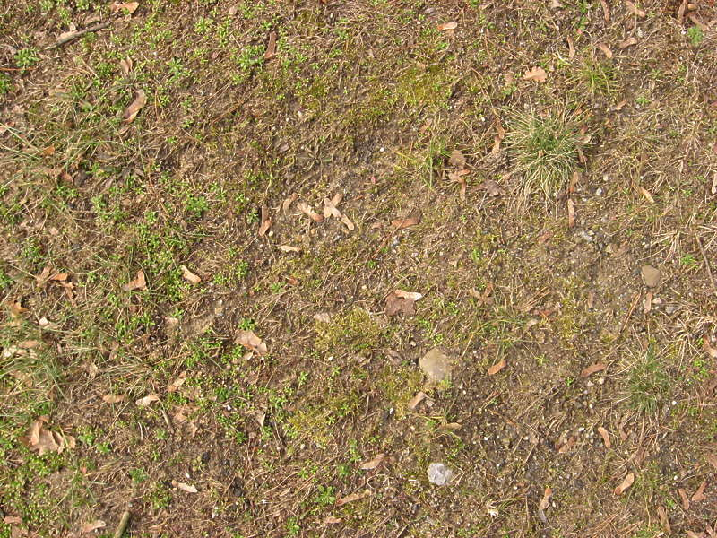 Groundplants0117 Free Background Texture Ground