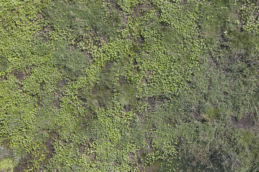 Groundplants0164 Free Background Texture Aerial Ground
