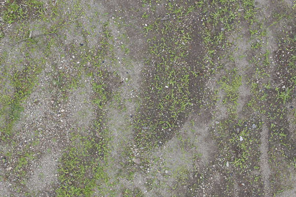 aerial ground terrain grass short groundplants plants