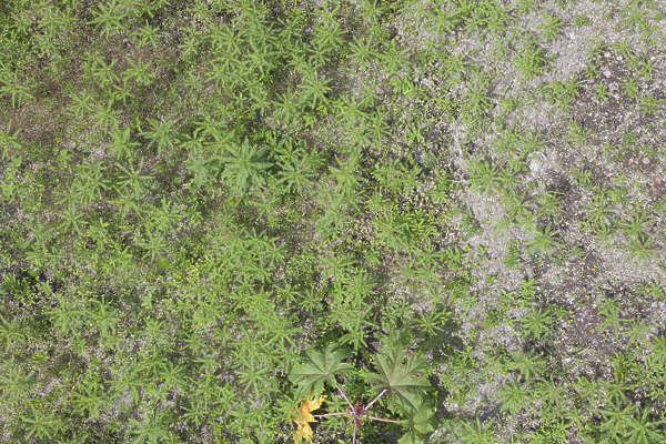 aerial ground terrain plants groundplants groundcover cover