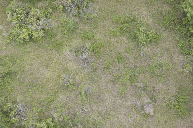 aerial ground terrain grass groundplants plants groundcover cover