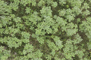 aerial ground terrain groundplants ground plants cover groundcover