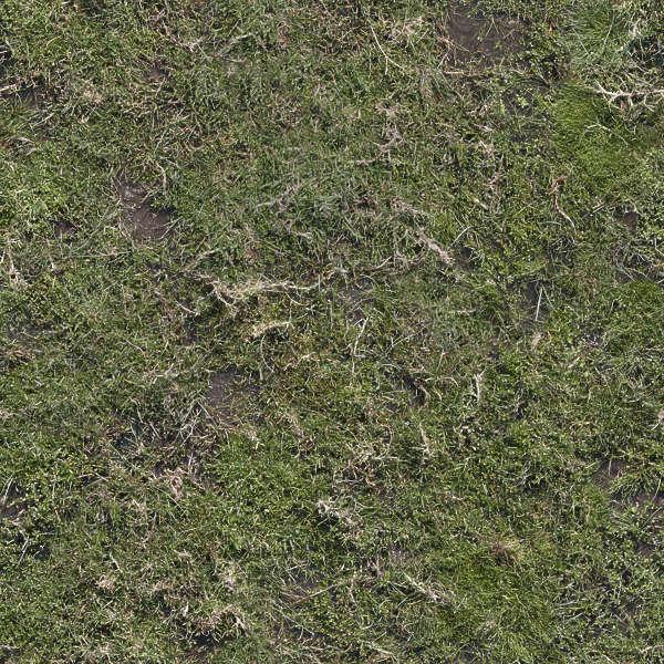 Groundplants0165 Free Background Texture Aerial Ground